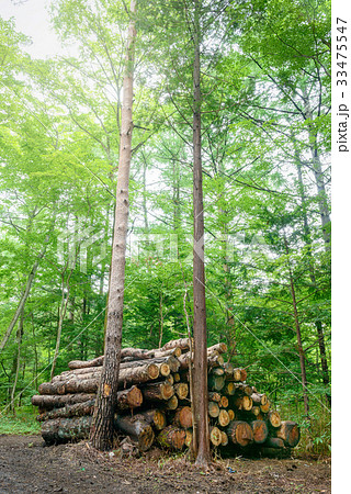 林業 33475547