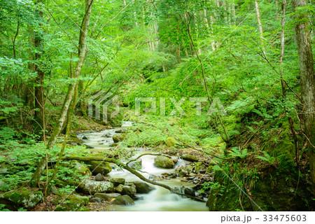 森の渓流、長野県、上田市、角間渓谷。 33475603
