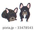 二匹の犬 フレンチブルドッグ 33478543