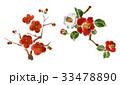 椿 梅 花のイラスト 33478890