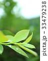 葉 植物 葉っぱの写真 33479238