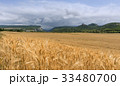 Field of wheat with mountainous backdrop 33480700