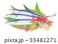 サンマ 秋刀魚 秋の味覚 33481271