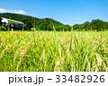 稲 田んぼ 夏の写真 33482926