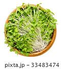 ミズナ 京菜 水菜の写真 33483474