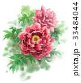 牡丹 花 植物のイラスト 33484044