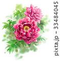 牡丹 花 植物のイラスト 33484045