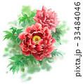 牡丹 花 植物のイラスト 33484046