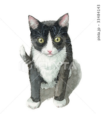 白黒ハチワレの子猫 33484143