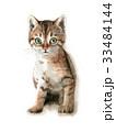 猫 子猫 水彩のイラスト 33484144
