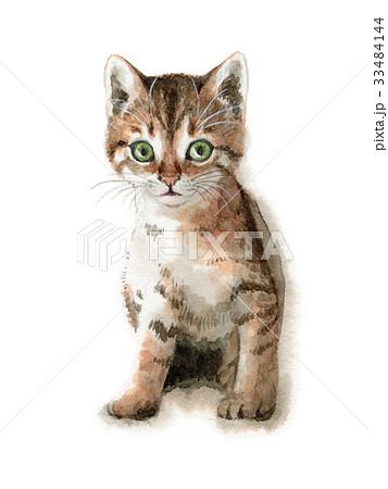 キジトラの子猫 33484144