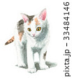 猫 子猫 水彩のイラスト 33484146