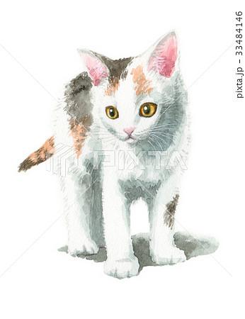 白三毛の子猫 33484146