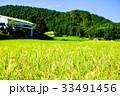 稲 田んぼ 夏の写真 33491456