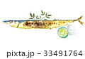 さんま 秋刀魚 秋の味覚のイラスト 33491764
