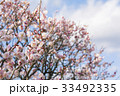 梅 春 花の写真 33492335