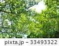 葉 自然 森林の写真 33493322