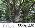 相馬神社のご神木 33494880
