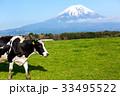 放牧された牛 33495522