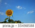 向日葵 33498588