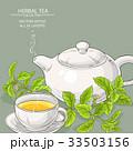 ステビア お茶 ベクトルのイラスト 33503156