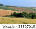 丘 北海道 夏の写真 33507015