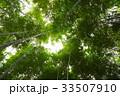 竹 竹の森 ローアングルの写真 33507910