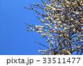 植物 花 梅の写真 33511477