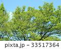 エコロジー 新緑 植物の写真 33517364