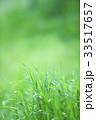 新緑 葉 背景の写真 33517657