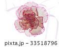 カーネーション 花 母の日の写真 33518796