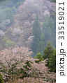 吉野山 桜 自然の写真 33519021