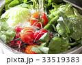 シンクで洗う色々な野菜 33519383