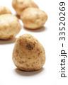 ジャガイモ 33520269