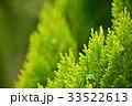 コノテガシワ 33522613