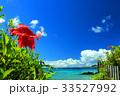 沖縄 ハイビスカス 青空の写真 33527992