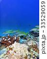 珊瑚 海 沖縄の写真 33529059