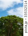 木 サイパン 風景の写真 33532514