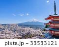 新倉山浅間公園 桜 富士山の写真 33533121