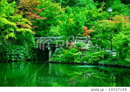 永観堂の庭園 33537149