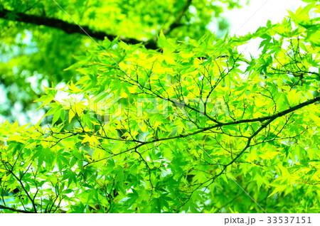 永観堂の庭園 33537151