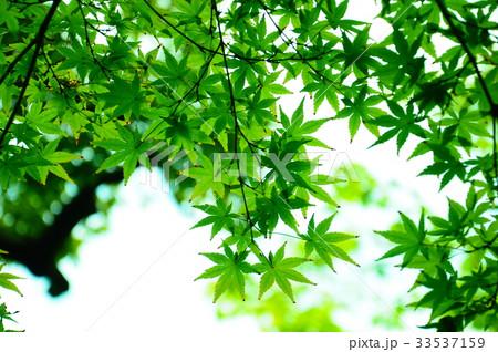 永観堂の庭園 33537159