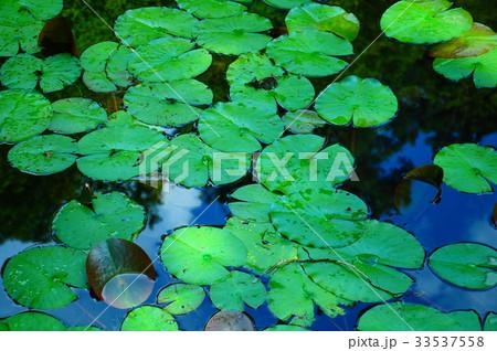天授庵の庭園 33537558