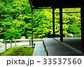 天授庵 庭園 緑の写真 33537560