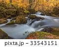 林 森 樹林の写真 33543151