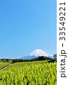 富士山 青空 茶畑の写真 33549221