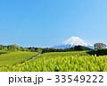 富士山 青空 茶畑の写真 33549222
