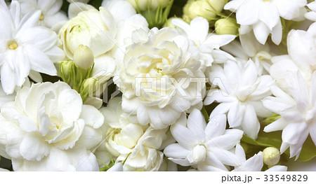 White jasmine flowers fresh flowers natural 33549829