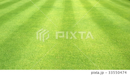 Green grass background 33550474