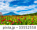 百日草 富士山 花畑の写真 33552558